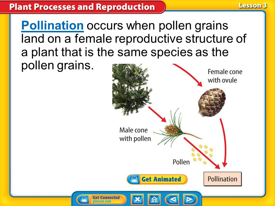 Pollination occurs when pollen grains land on a female reproductive structure of a plant that is the same species as the pollen grains.