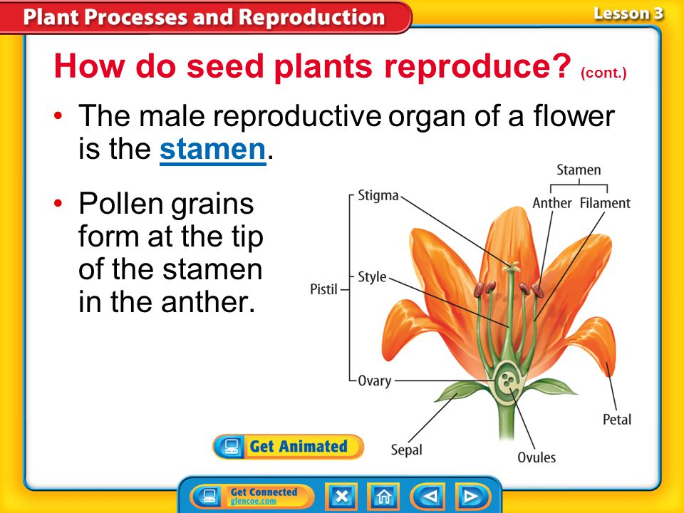 How do seed plants reproduce (cont.)