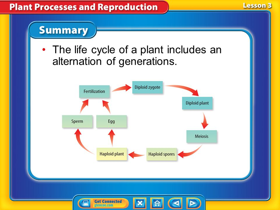 The life cycle of a plant includes an alternation of generations.