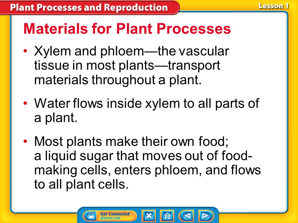 Materials for Plant Processes