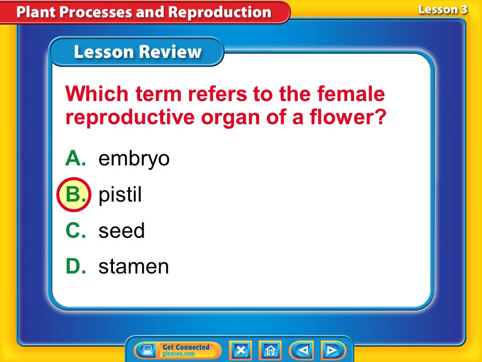 Which term refers to the female reproductive organ of a flower