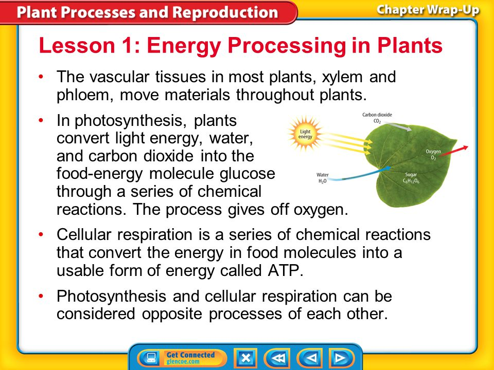Lesson 1: Energy Processing in Plants