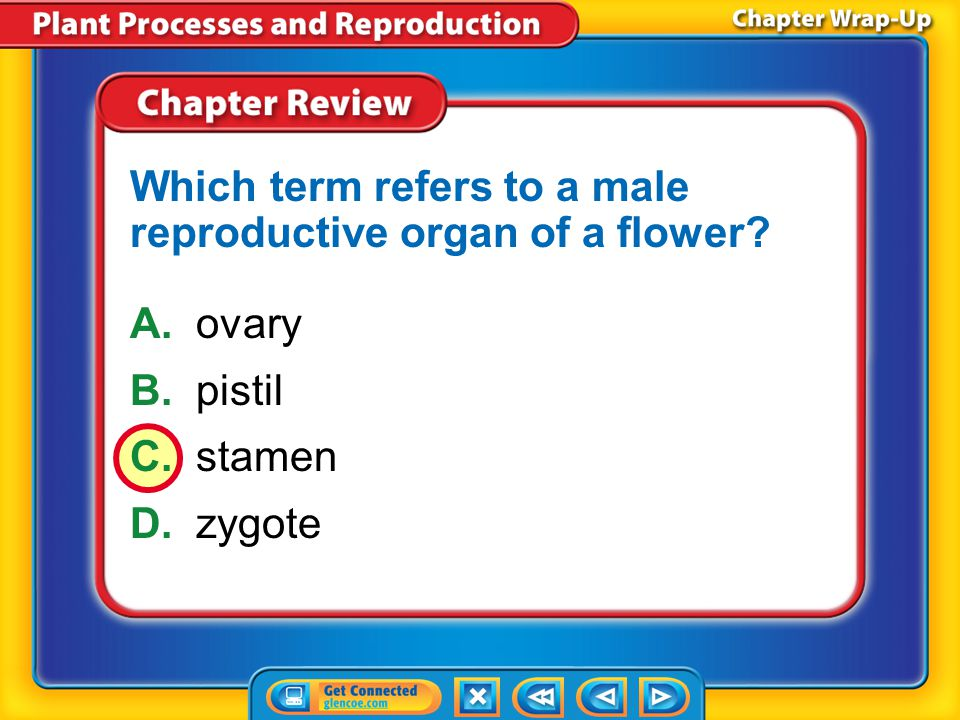 Which term refers to a male reproductive organ of a flower