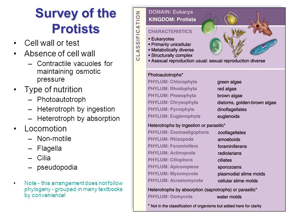 Survey of the Protists Cell wall or test Absence of cell wall