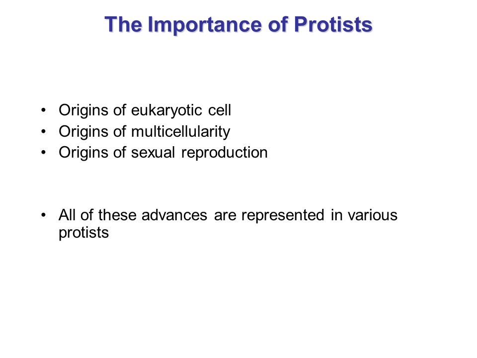 The Importance of Protists