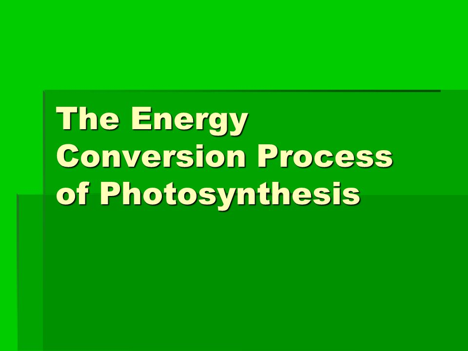 The Energy Conversion Process of Photosynthesis