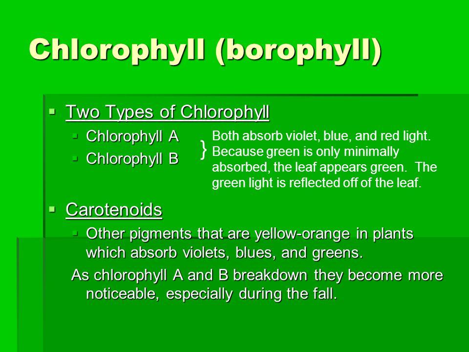 Chlorophyll (borophyll)