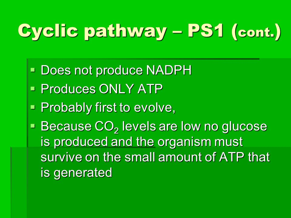 Cyclic pathway – PS1 (cont.)