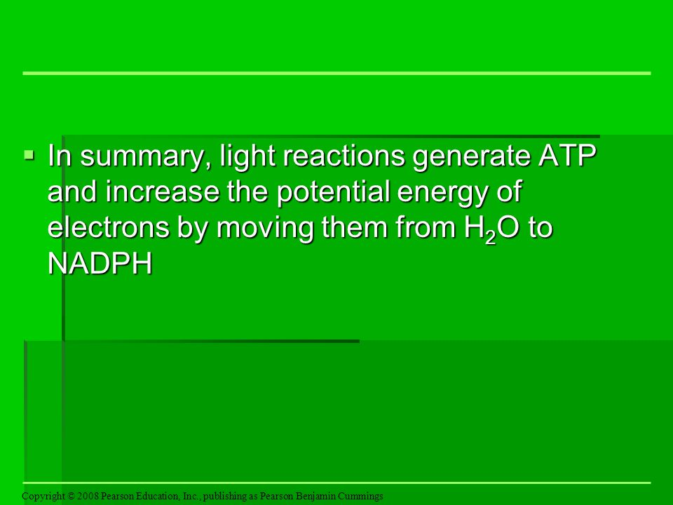In summary, light reactions generate ATP and increase the potential energy of electrons by moving them from H2O to NADPH