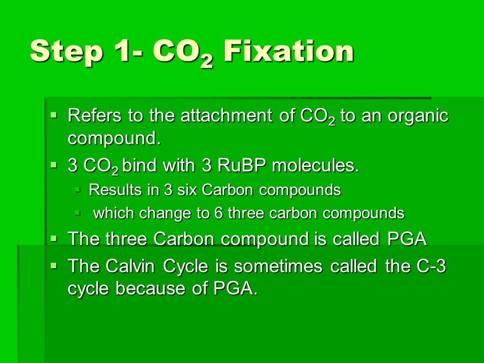 Step 1- CO2 Fixation Refers to the attachment of CO2 to an organic compound. 3 CO2 bind with 3 RuBP molecules.