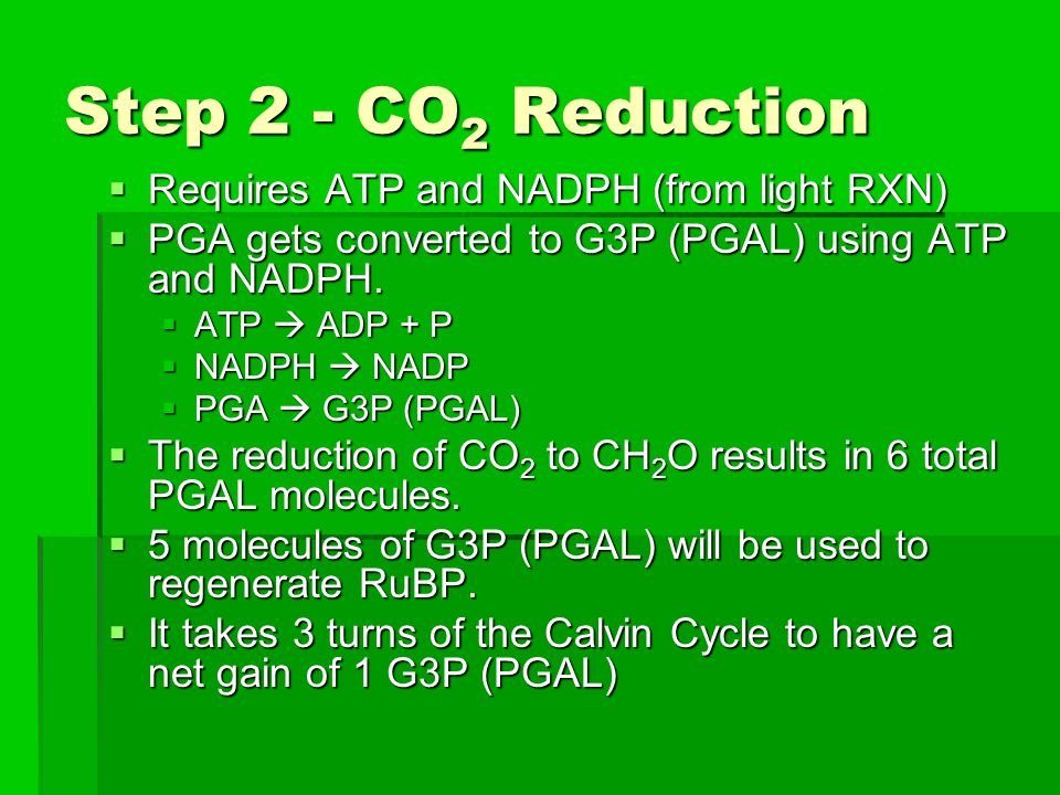Step 2 - CO2 Reduction Requires ATP and NADPH (from light RXN)