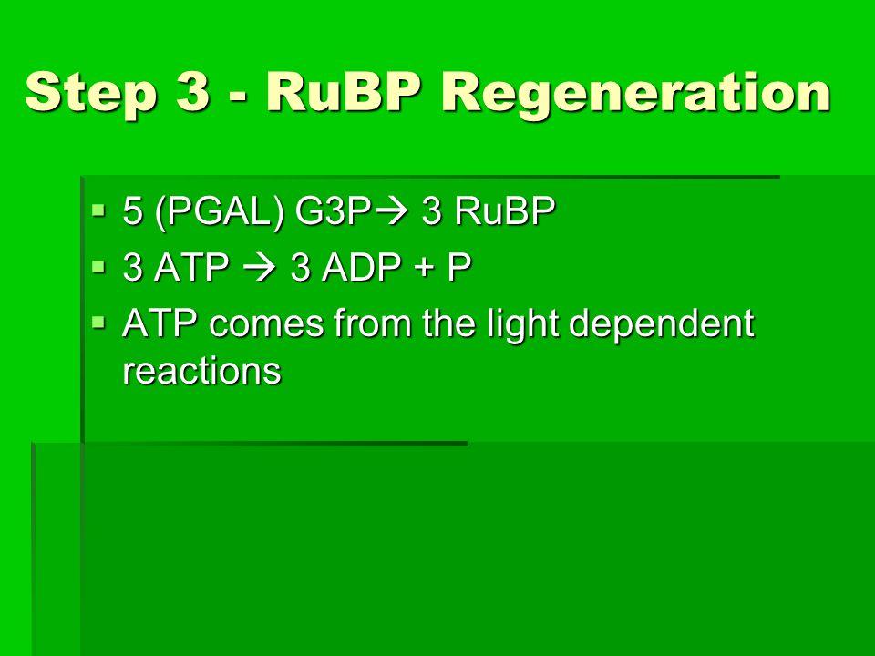 Step 3 - RuBP Regeneration