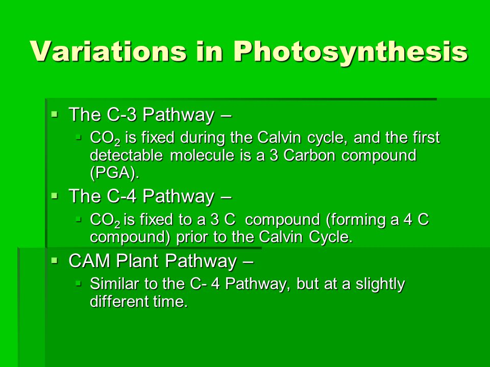Variations in Photosynthesis