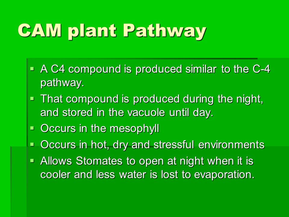 CAM plant Pathway A C4 compound is produced similar to the C-4 pathway.