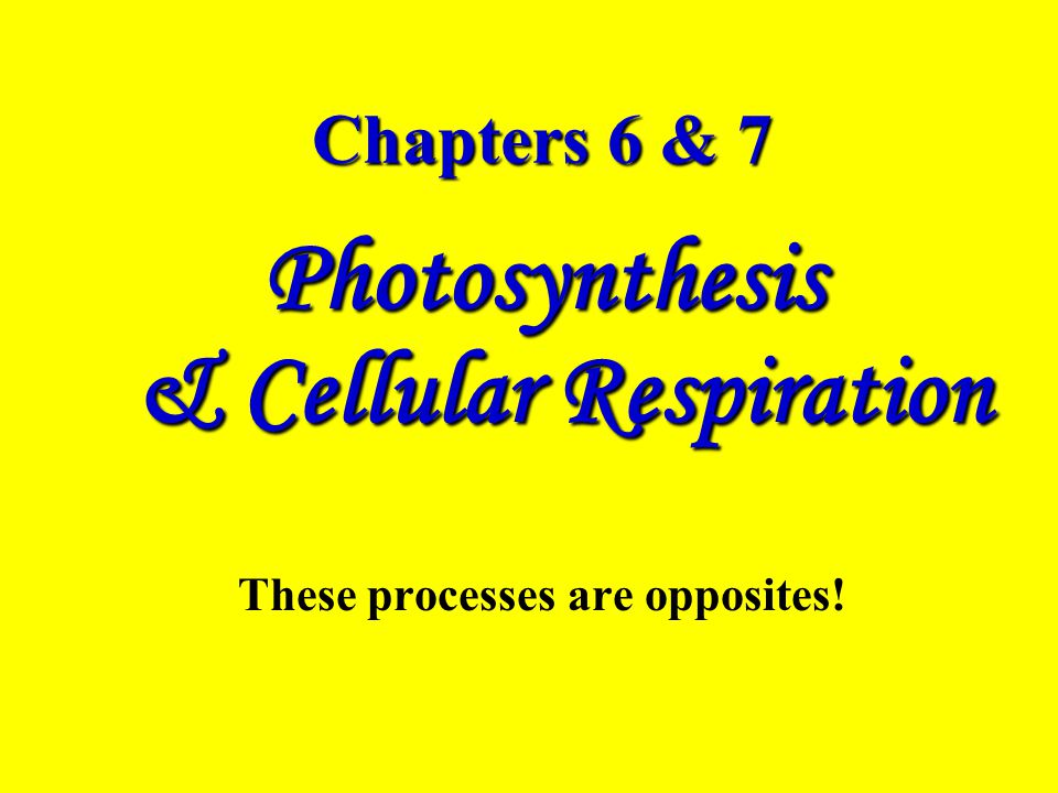 Photosynthesis & Cellular Respiration These processes are opposites!