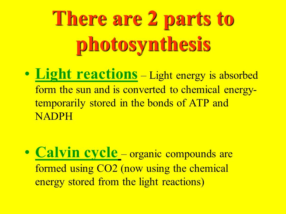 There are 2 parts to photosynthesis