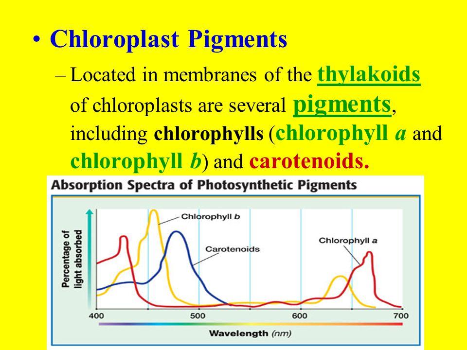 Chloroplast Pigments