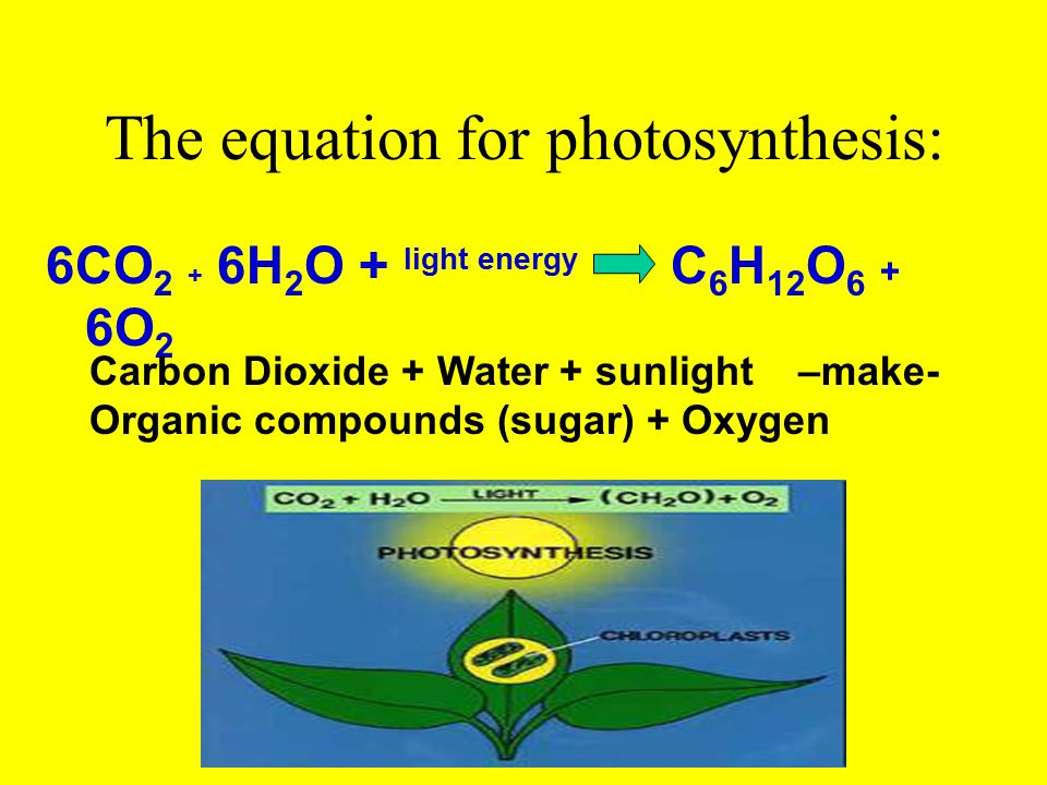 The equation for photosynthesis: