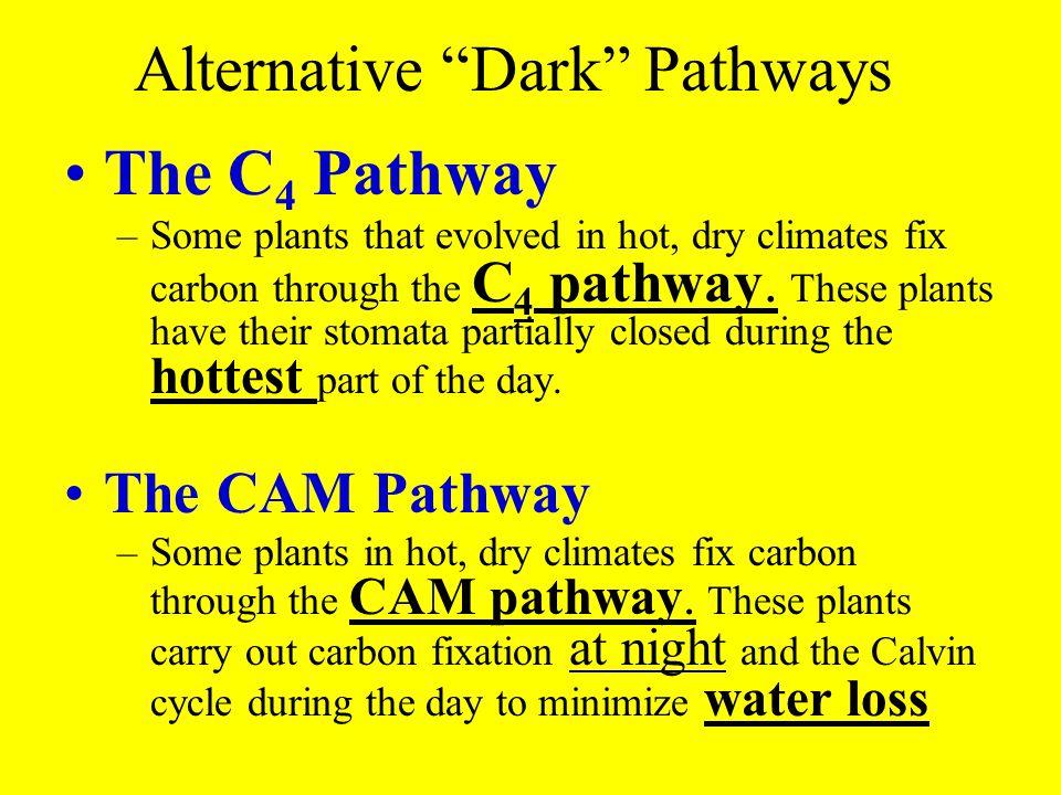 Alternative Dark Pathways