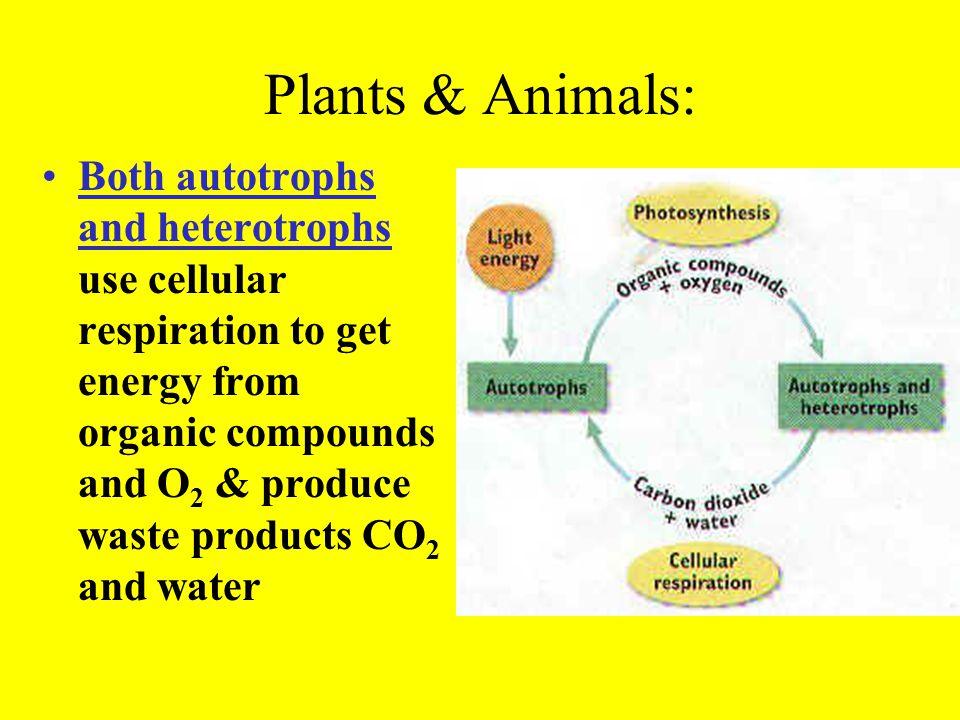 Plants & Animals: