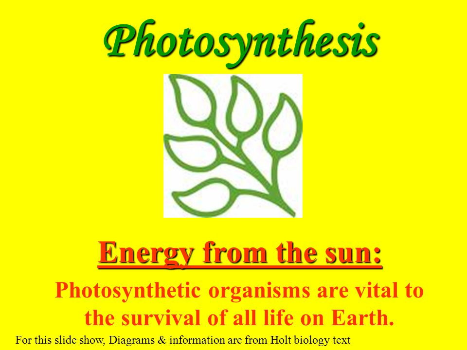 Photosynthesis Energy from the sun: