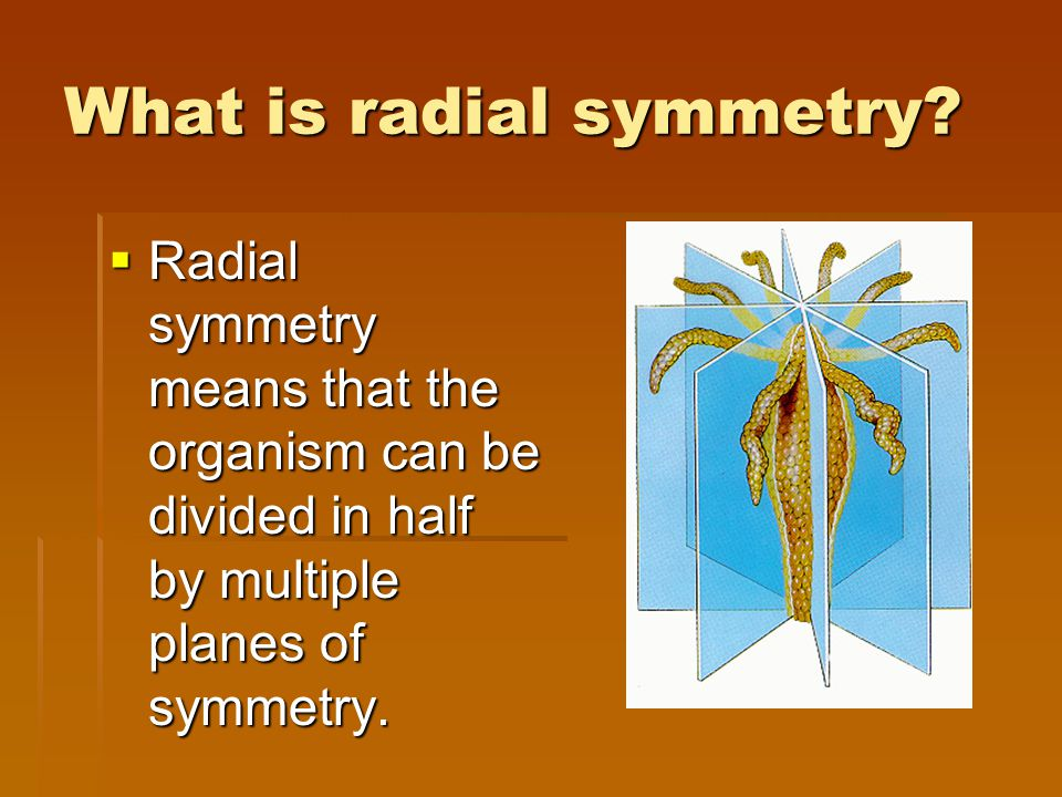 What is radial symmetry