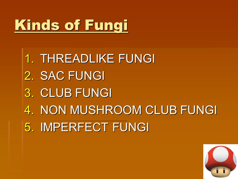 Kinds of Fungi THREADLIKE FUNGI SAC FUNGI CLUB FUNGI