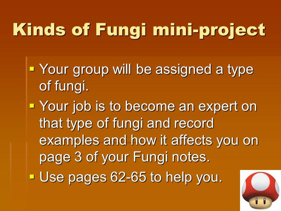 Kinds of Fungi mini-project