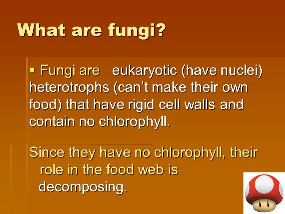 What are fungi eukaryotic (have nuclei) heterotrophs (can't make their own food) that have rigid cell walls and contain no chlorophyll.