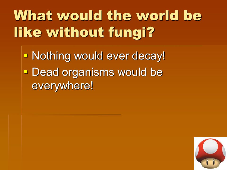 What would the world be like without fungi