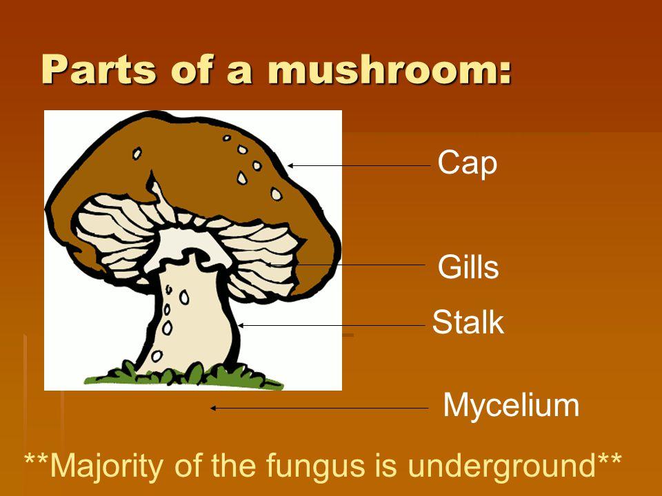Parts of a mushroom: Cap Gills Stalk Mycelium