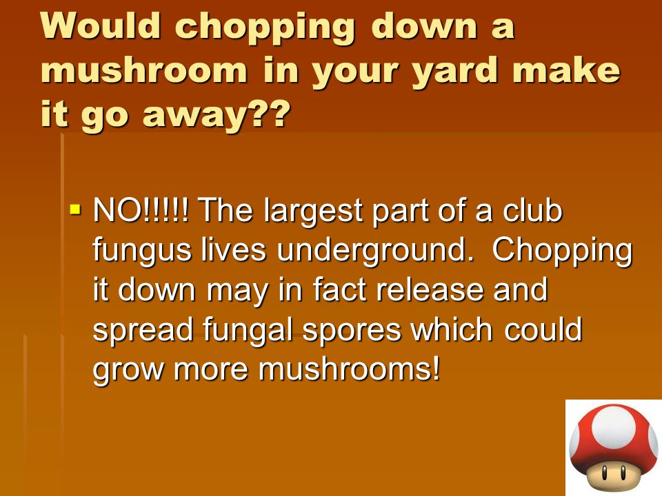 Would chopping down a mushroom in your yard make it go away