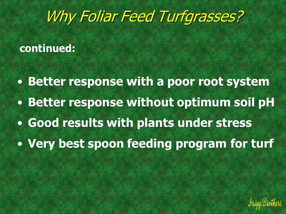 Why Foliar Feed Turfgrasses