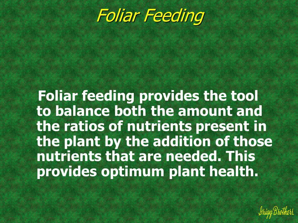 Foliar Feeding