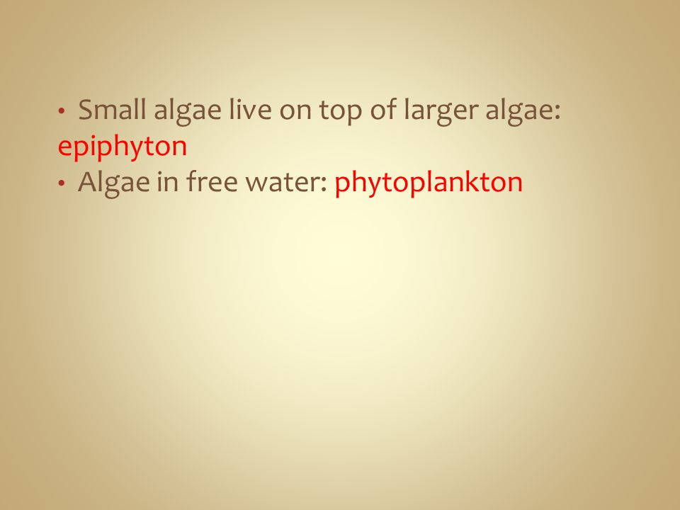 Small algae live on top of larger algae: epiphyton