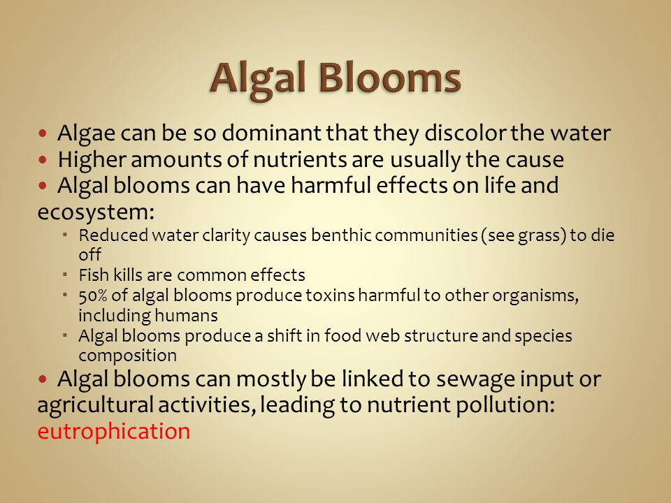 Algal Blooms Algae can be so dominant that they discolor the water