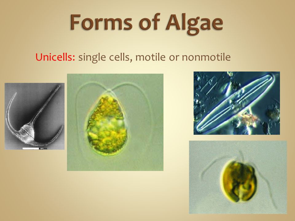 Unicells: single cells, motile or nonmotile
