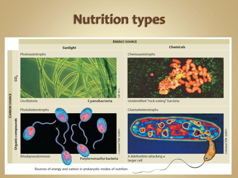 Nutrition types Cyanobacteria Purple nonsulfur bacteria