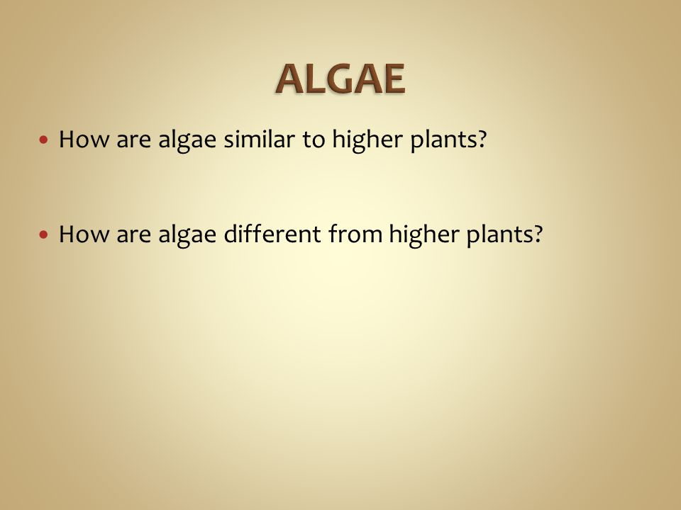 ALGAE How are algae similar to higher plants