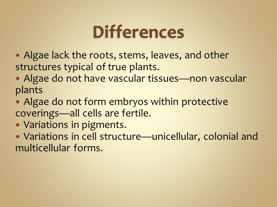 Differences Algae lack the roots, stems, leaves, and other structures typical of true plants. Algae do not have vascular tissues—non vascular plants.