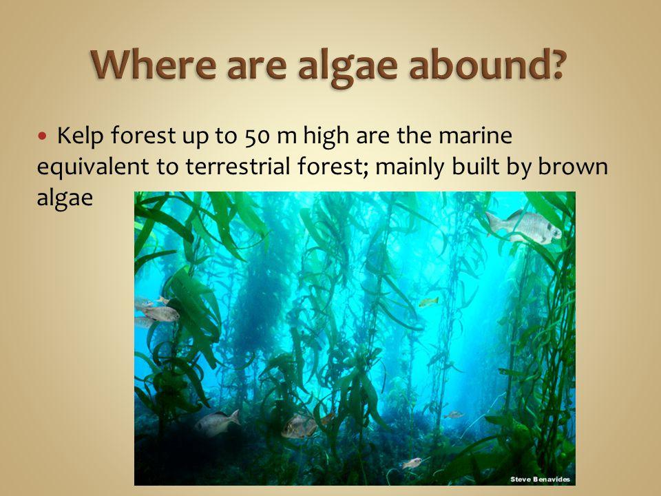 Where are algae abound.