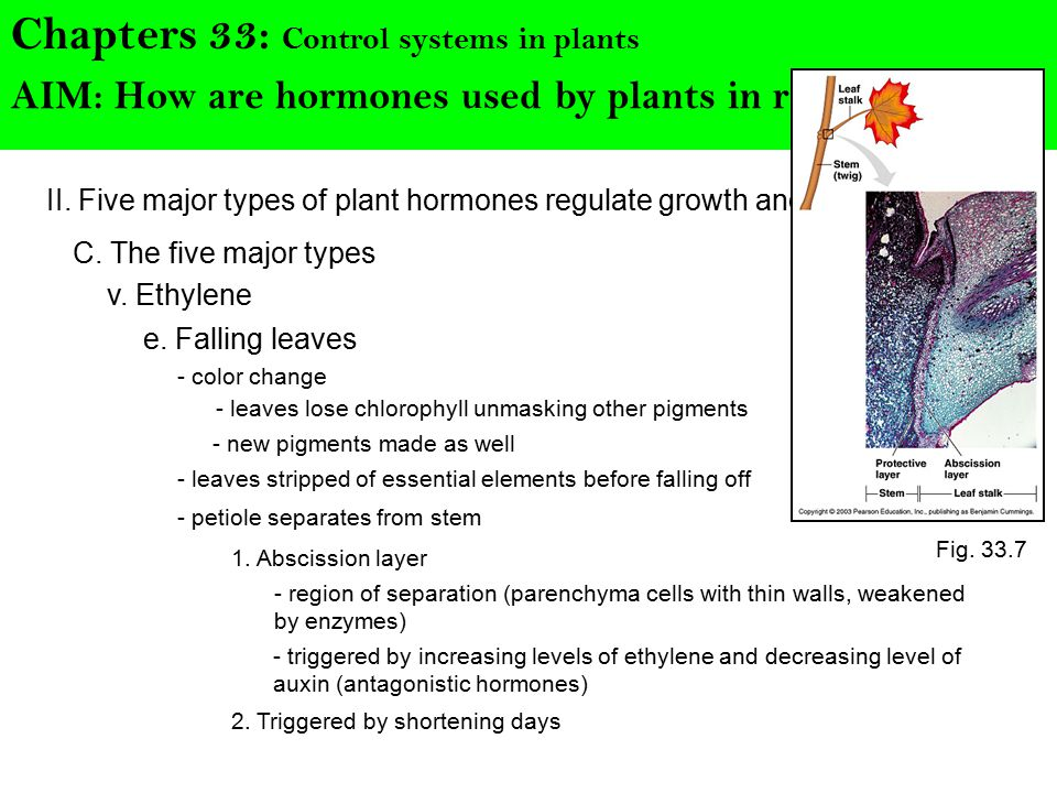 Chapters 33: Control systems in plants