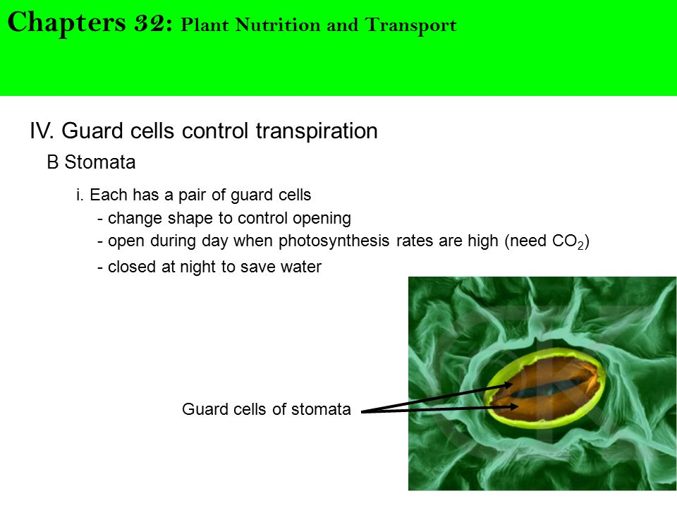 Chapters 32: Plant Nutrition and Transport