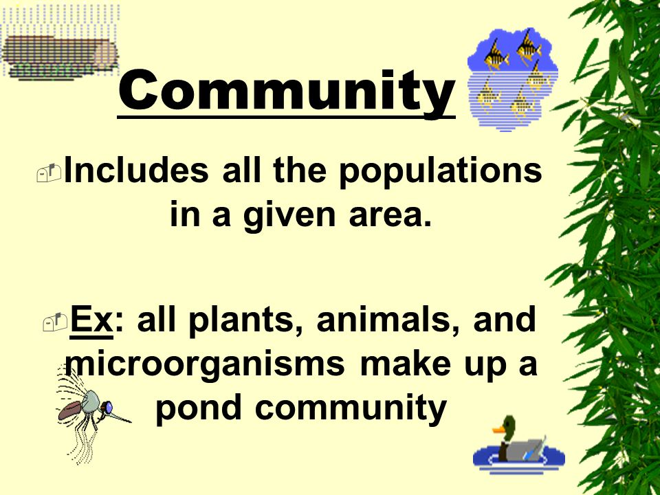 Community Includes all the populations in a given area.