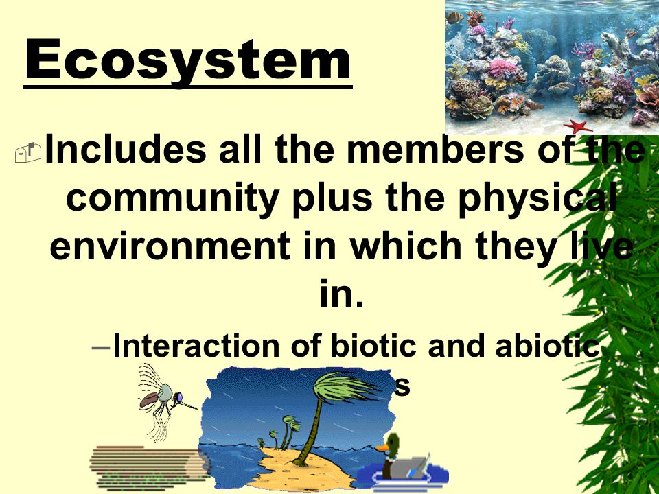 Interaction of biotic and abiotic factors