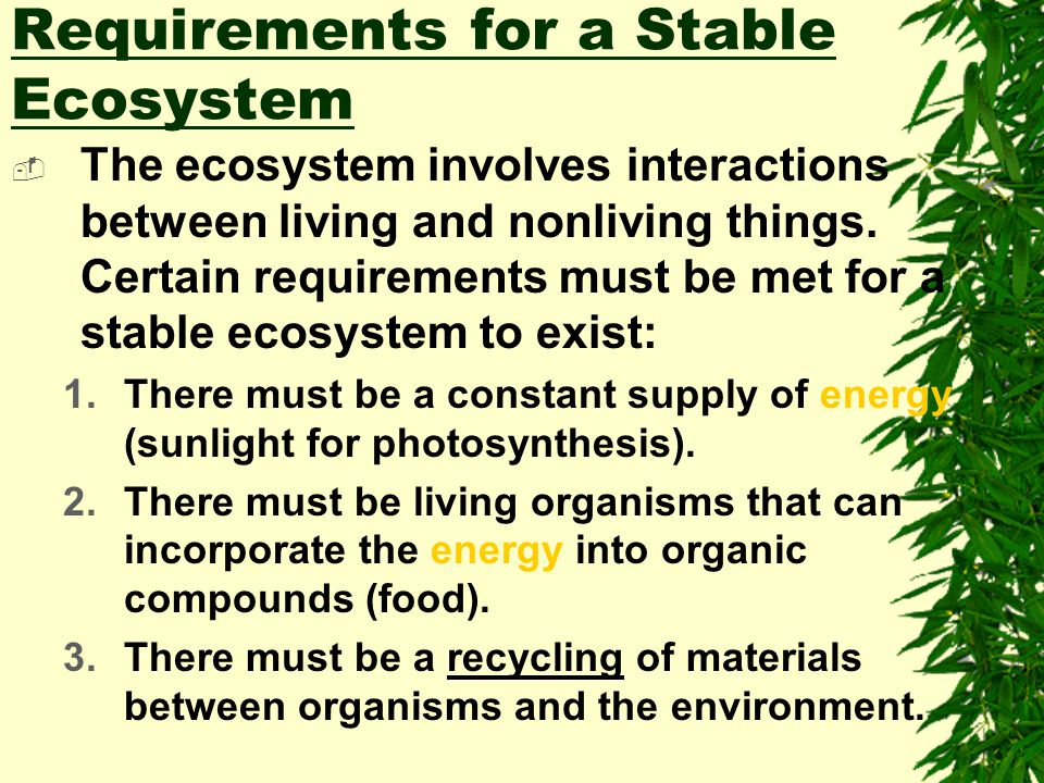 Requirements for a Stable Ecosystem