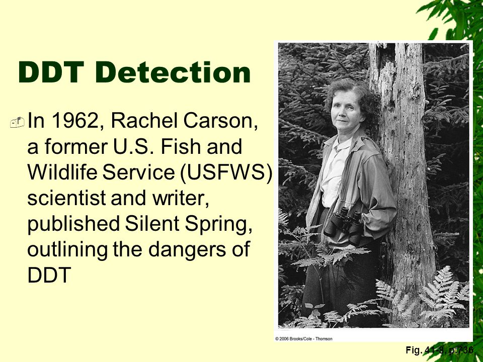 DDT Detection
