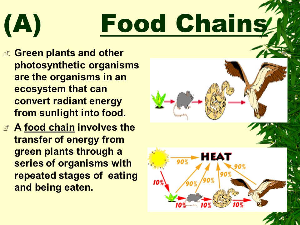 (A) Food Chains
