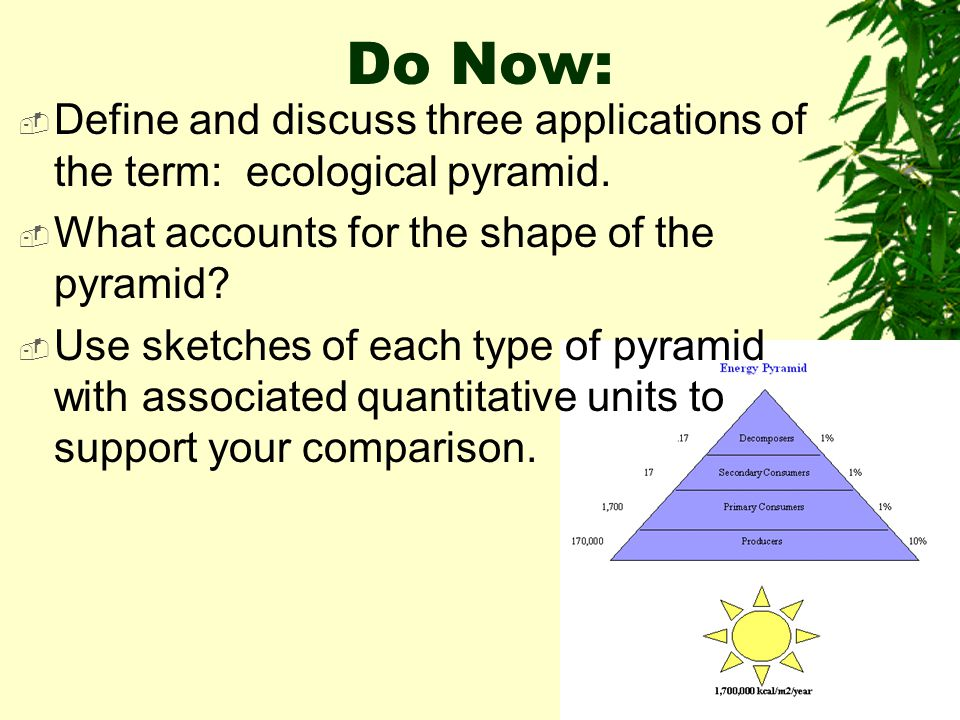 Do Now: Define and discuss three applications of the term: ecological pyramid. What accounts for the shape of the pyramid