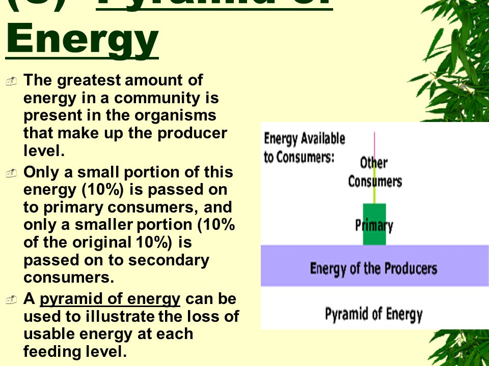 (C) Pyramid of Energy The greatest amount of energy in a community is present in the organisms that make up the producer level.